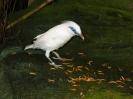 Ausflug Walsrode 05 und 06-05-2005