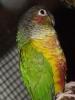 vogelschau12